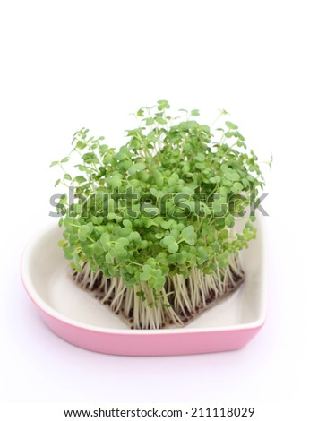 growing salad mustard cress, roots and stems in plate - stock photo