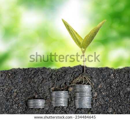 Growing seed with stacked coin-investment plan concept - stock photo