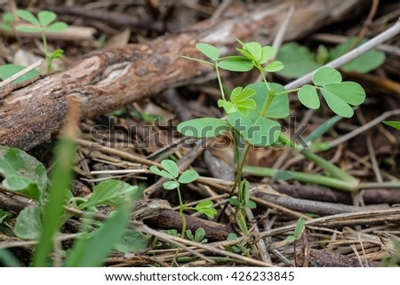 Growing small tree on the ground, start growing young tree in forest - stock photo