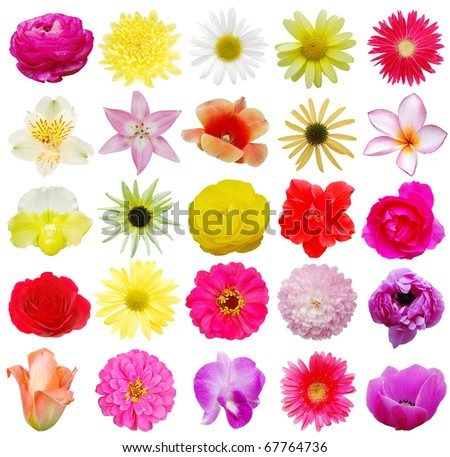 Growing spring flowers - stock photo