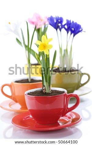 growing spring flowers in a cup (spring concept) - stock photo
