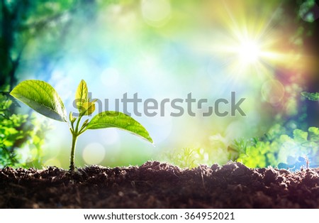 Growing Sprout - Beginning Of A New Life  - stock photo