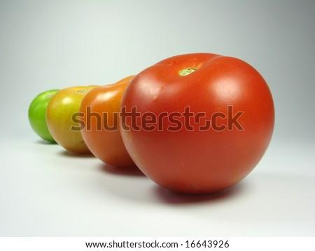 Growing tomatoes - stock photo
