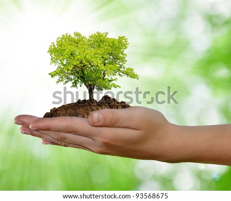 growing tree in hand on green background - stock photo