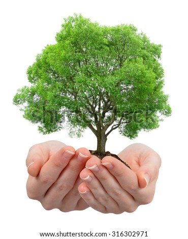 Growing tree in hands isolated on white - stock photo