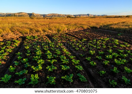 Growing vegetables in an African landscape at sunrise
