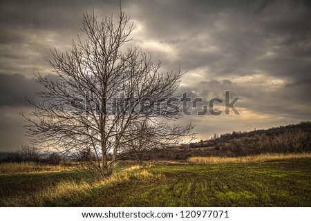 Growing wheat field with tree, hdr pictures - stock photo