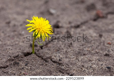 Growing  yellow flower sprout in ground   - stock photo