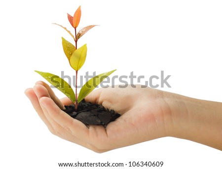 growing young plant in a hand - stock photo
