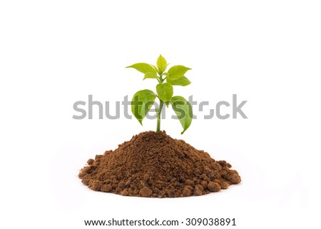 Growing young plant isolate on white background. - stock photo