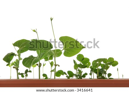Growing young plant .Isolated. - stock photo