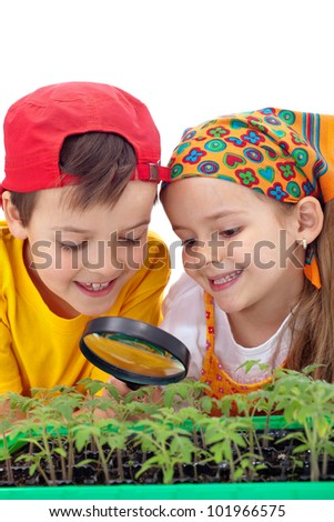 Growing your own food - kids study tomato seedlings with magnifier - stock photo