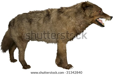 growling wolf side view isolated on white - stock photo
