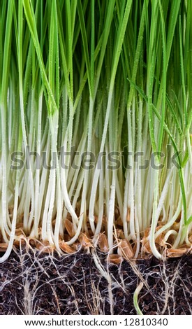 growth - stock photo
