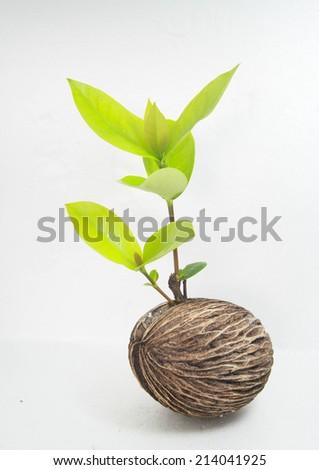 growth - stock photo