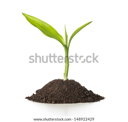Growth close up of small plant growing up from soil isolated on white