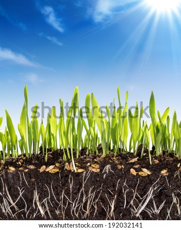 growth concept - background - soil in spring