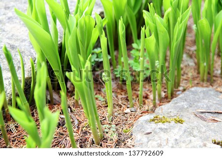 growth concept  young green plants - stock photo