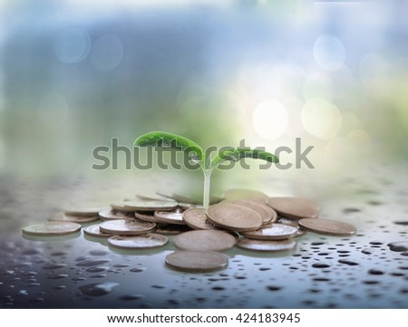 Growth, financial planning and investment concept.Coins and tree branch  - stock photo