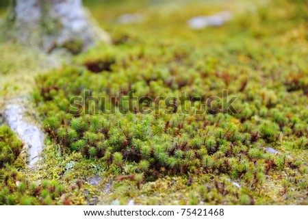 Growth of moss in spring