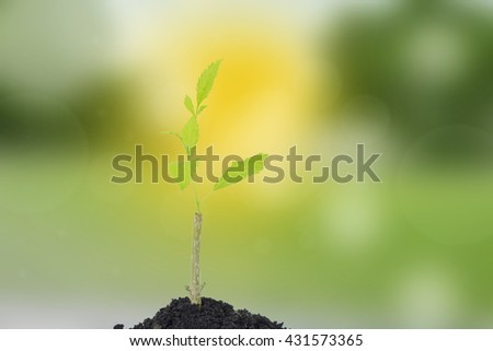Growth of new life  on nature background