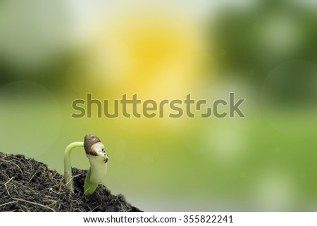 Growth of new life  on white background - stock photo