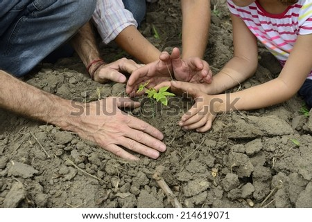 Growth or development concept: Family hands protecting small plant