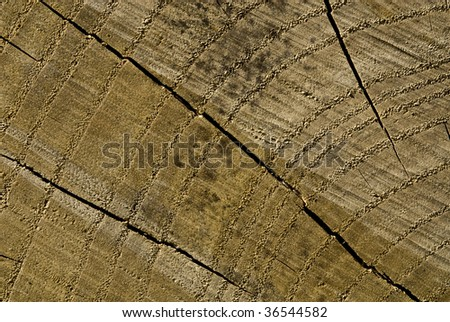 growth rings - stock photo