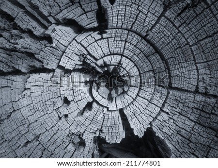 Growth rings on an old trunk - stock photo
