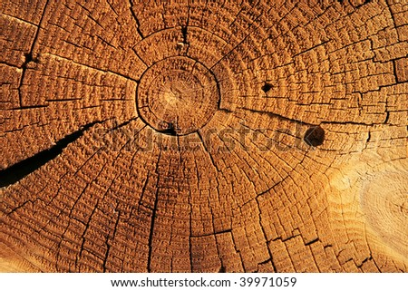 growth rings on the end of a brown sawed log - stock photo
