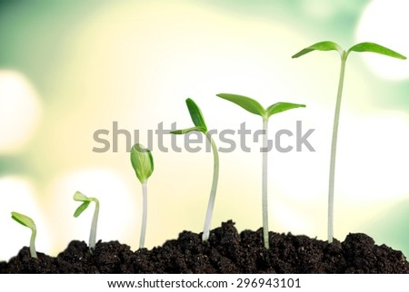 Growth, Seedling, Plant.