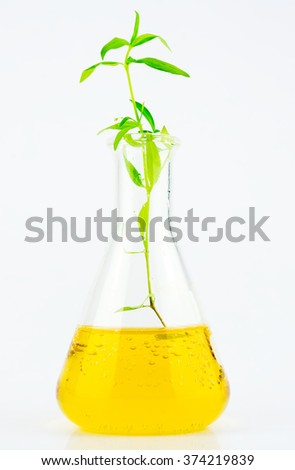 Growth up plant in glass tube test-Environment Concept - stock photo