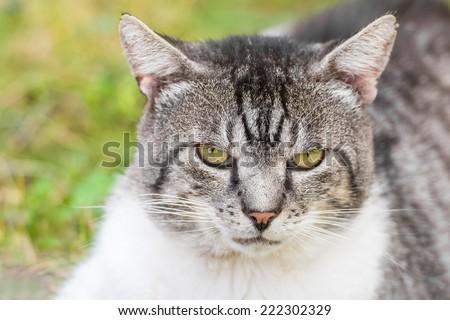 Grumpy Cat Portrait - stock photo