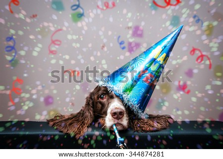 grumpy new year dog wearing a party hat and blowing a party blower