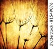 Grunge abstract dandelion flower background, soft focus - stock photo