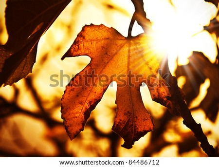 Grunge autumn dark background with dry maple leaves and bright sun light - stock photo