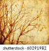 Grunge autumnal tree - stock photo