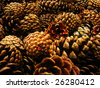 Grunge background of pine cones - stock photo