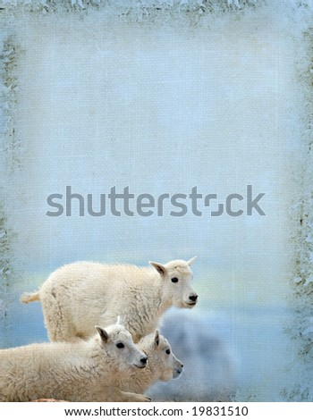 Grunge background of young mountain goats.