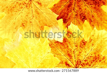 Grunge background with autumn maple leaves - stock photo