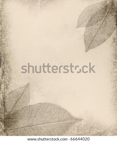 grunge background with leaf