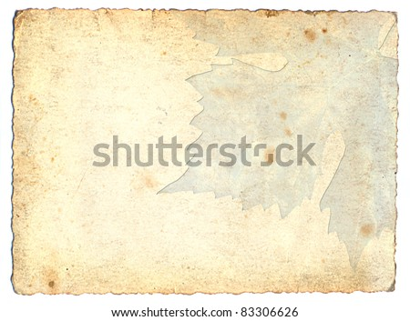 grunge background with maple - stock photo
