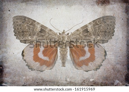 Grunge background with red underwing butterfly  - stock photo