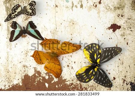 grunge Butterfly background - stock photo