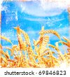 Grunge field of wheat and blue sky - stock photo