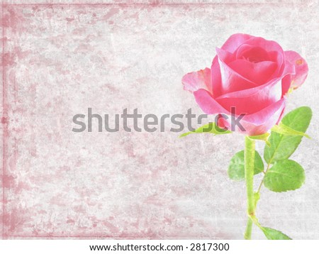 Grunge floral background - pink rose - stock photo