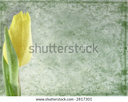 Grunge floral background - yellow  tulip - stock photo