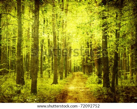 grunge forest background with space for text or image - stock photo