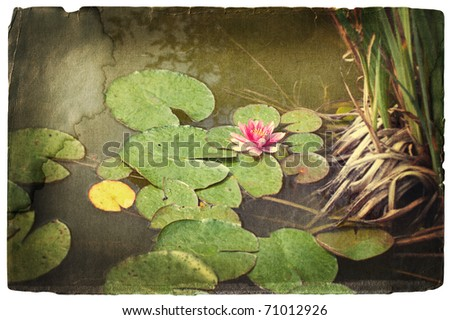 grunge image of a pink water lily in a pond - stock photo