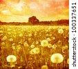 Grunge image of dandelion field at sunset. - stock photo